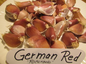 Ail German Red ROCAMBOLES
