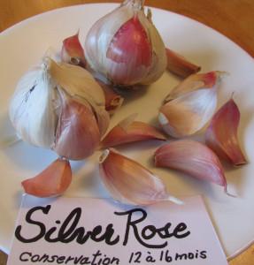Ail Silver Rose SILVERSKIN